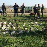 rabbit hunting in romania
