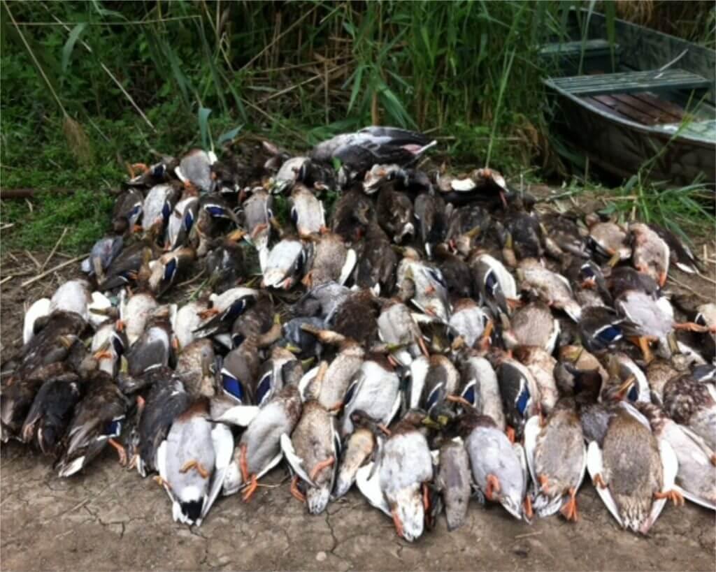 duck-hunting-in-romania