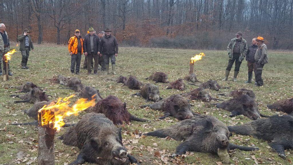 wild-boar-hunting-in-romania