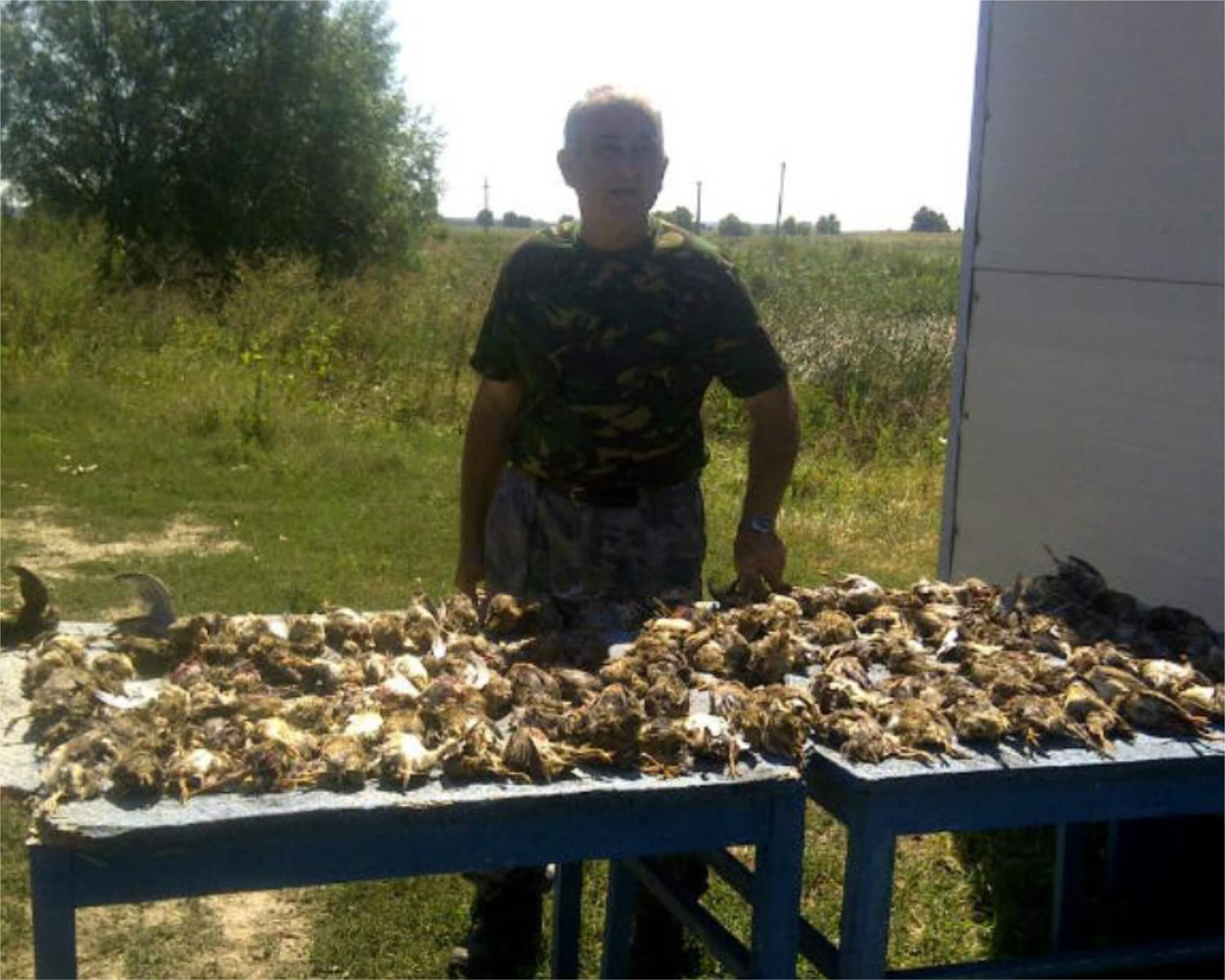 Quail hunting in Romania